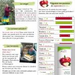 Flyer Vente de Pommes