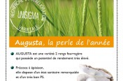 Publicité Agricole - variété Augusta